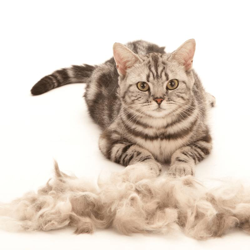 соборную надо линька у кошек картинки все кондитерские изделия