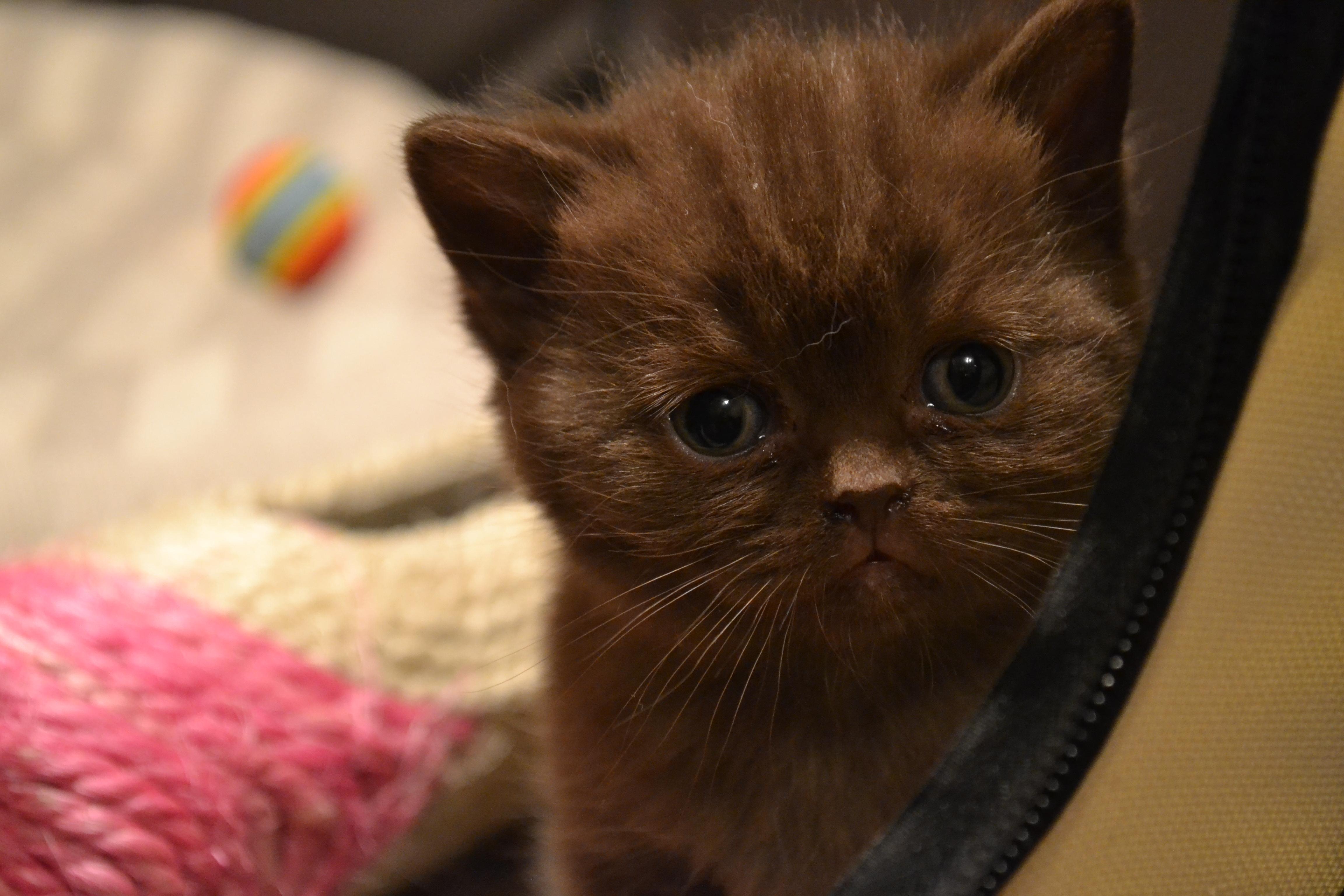 нами котята с карими глазами фото часто